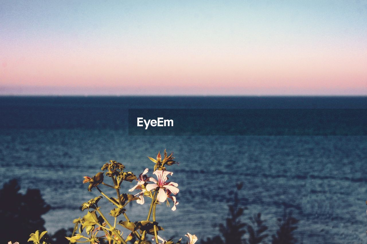 sky, beauty in nature, water, sunset, sea, horizon over water, scenics - nature, nature, plant, flowering plant, tranquility, flower, horizon, tranquil scene, freshness, copy space, no people, fragility, growth, outdoors, flower head
