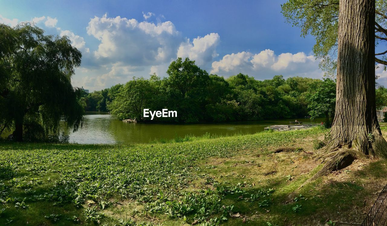 plant, tree, water, sky, tranquility, scenics - nature, tranquil scene, green color, beauty in nature, cloud - sky, growth, nature, day, lake, grass, no people, land, non-urban scene, outdoors, swamp