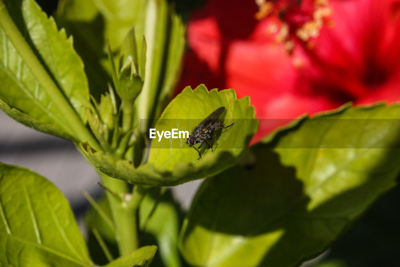one animal, green color, animals in the wild, animal themes, leaf, insect, animal wildlife, nature, close-up, plant, growth, outdoors, day, selective focus, no people, beauty in nature, fragility, freshness