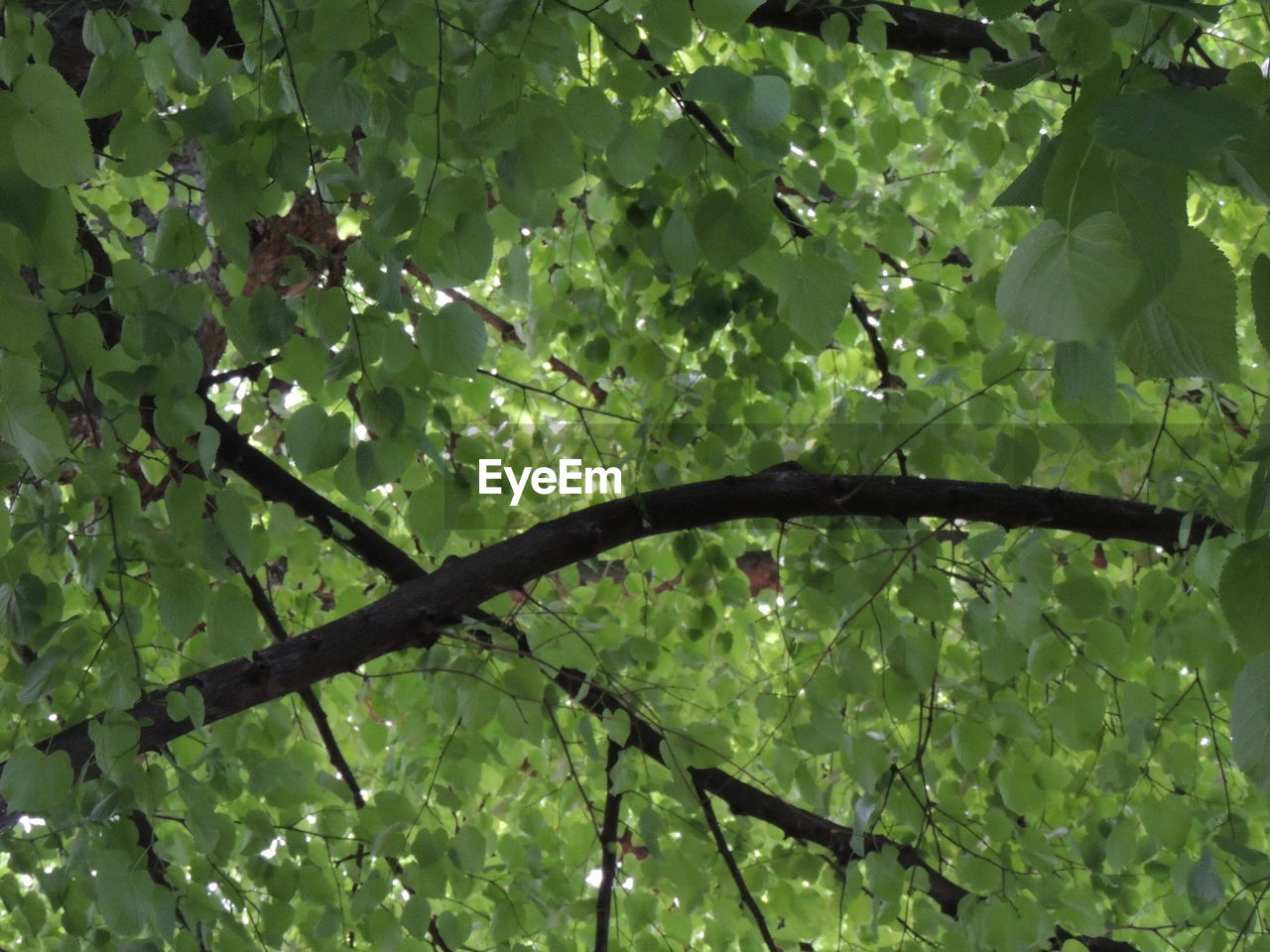 growth, nature, leaf, beauty in nature, no people, outdoors, tree, green color, day, branch, low angle view, fragility, freshness, close-up