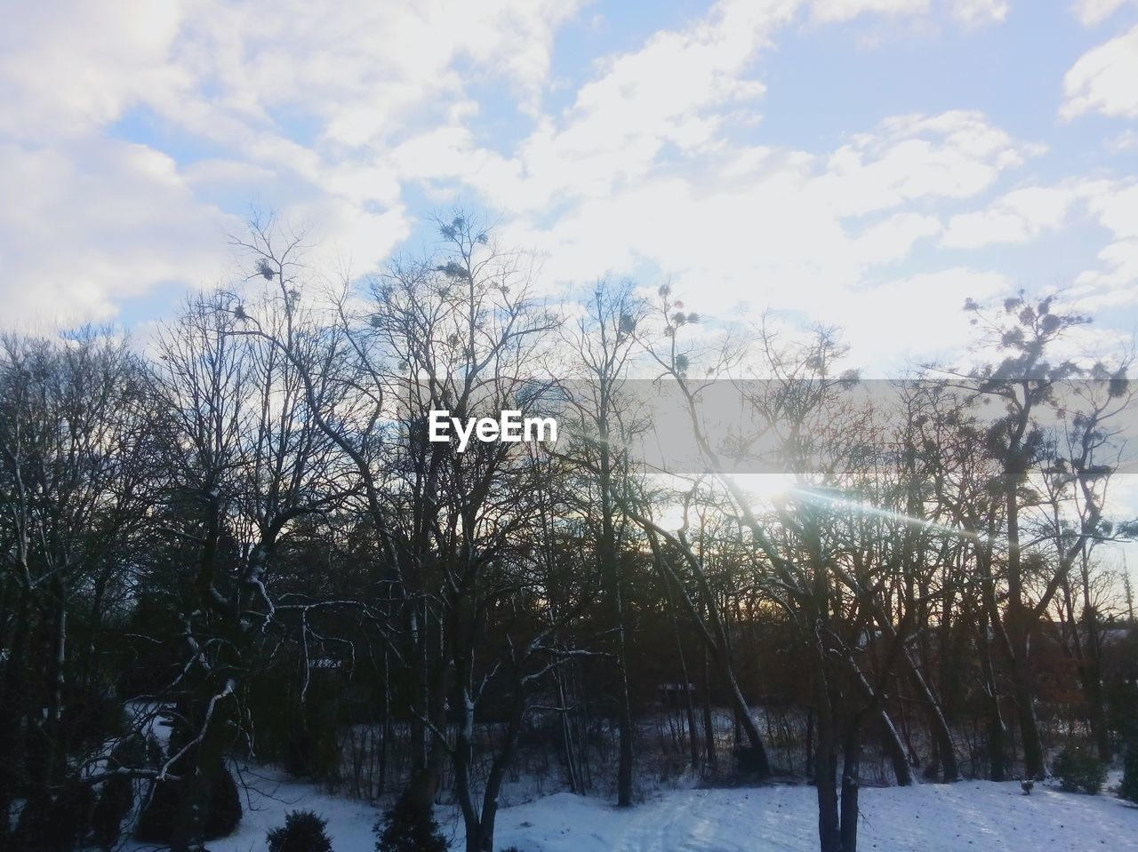 winter, snow, cold temperature, nature, weather, tranquility, beauty in nature, scenics, outdoors, tranquil scene, cold, sky, no people, tree, day, landscape, frozen, field, sunlight