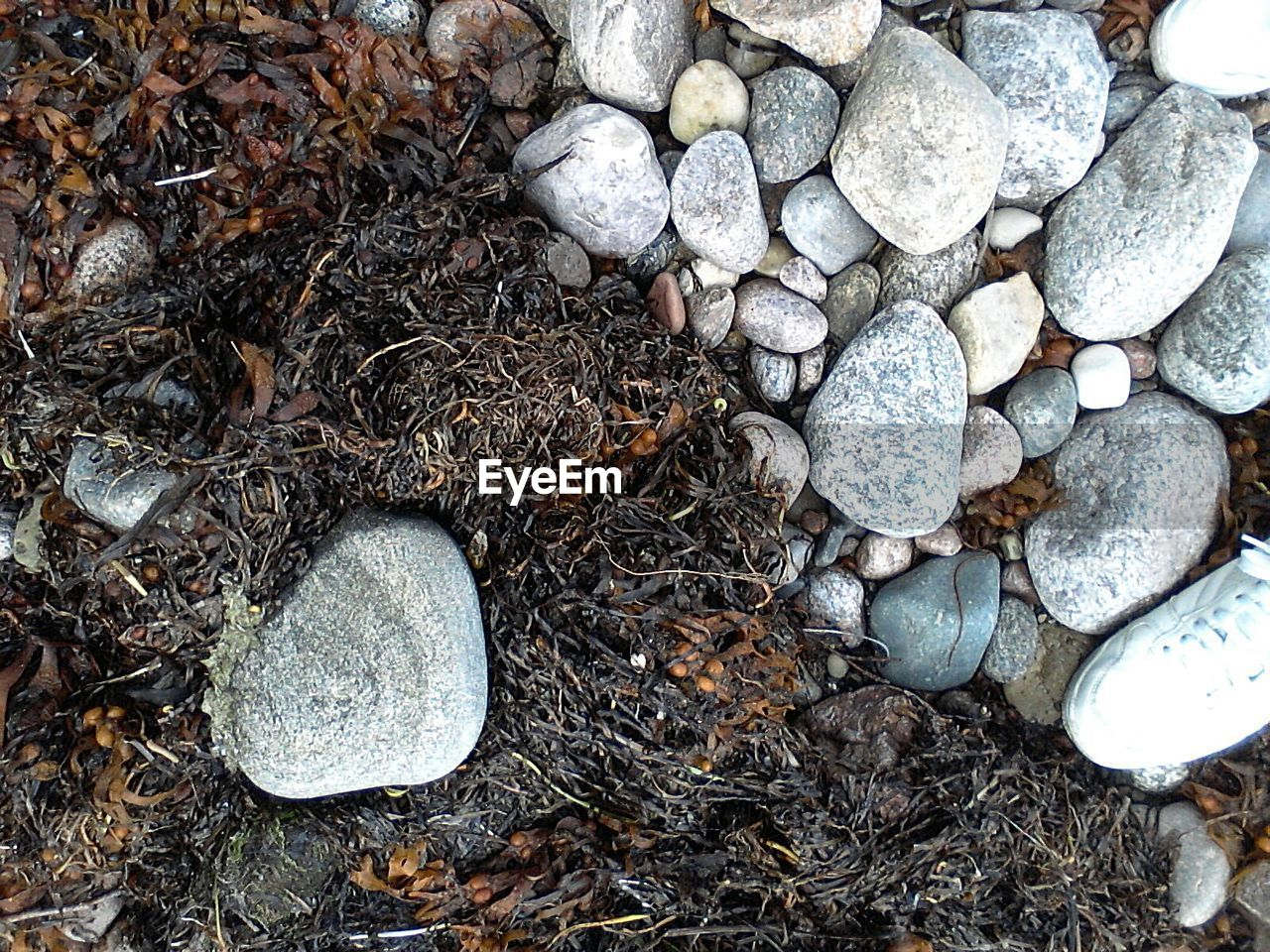 day, high angle view, no people, outdoors, pebble, nature, close-up, pebble beach