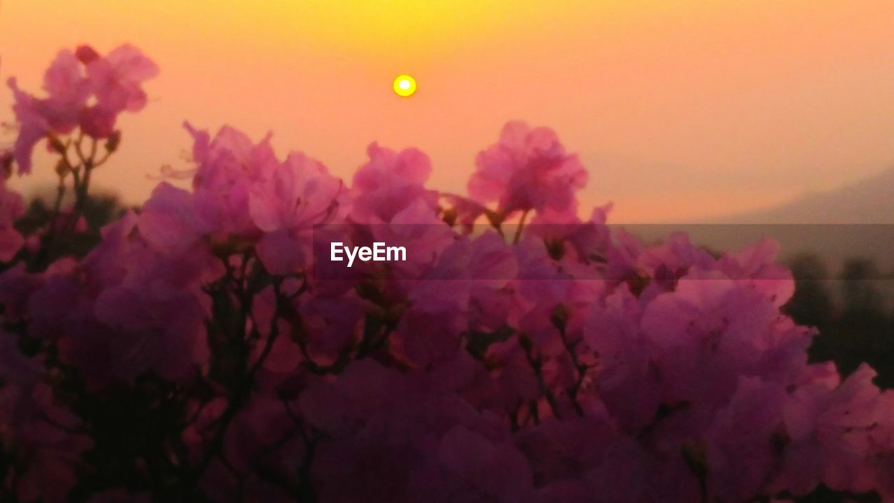 flower, beauty in nature, nature, growth, moon, sunset, fragility, no people, sun, petal, freshness, sky, plant, outdoors, close-up, flower head, day