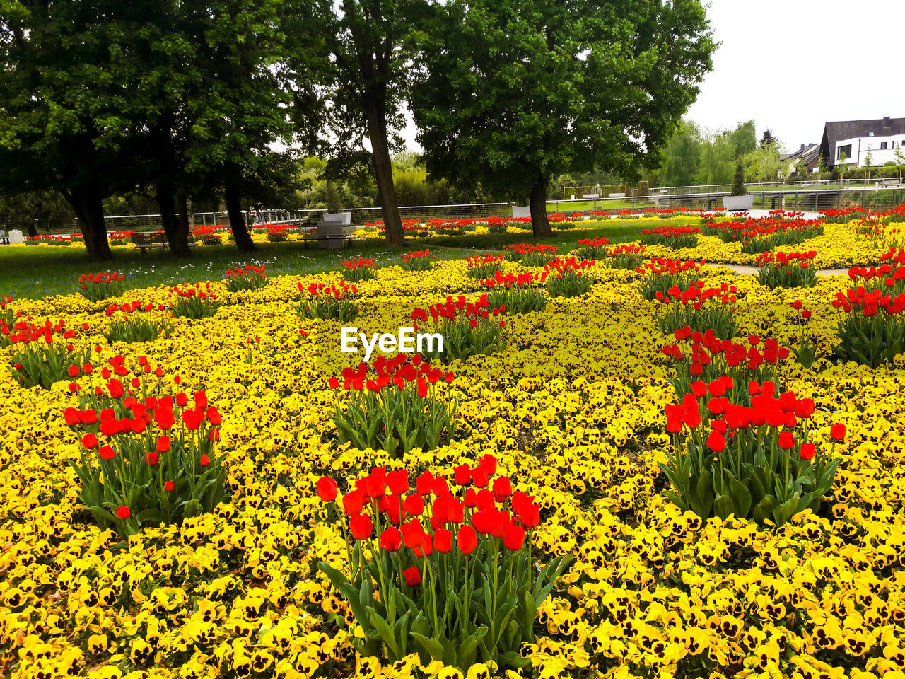 VIEW OF FLOWERING PLANTS IN PARK AT GARDEN