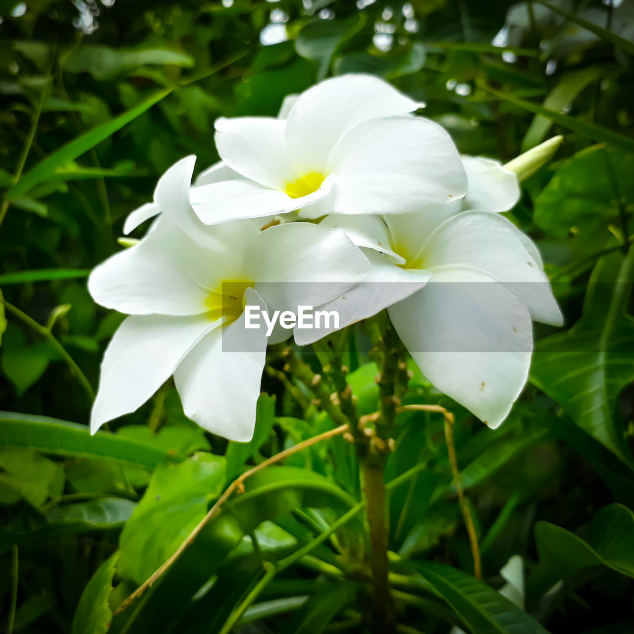 white color, petal, flower, growth, beauty in nature, nature, fragility, flower head, day, freshness, plant, close-up, no people, outdoors, blooming, snowdrop