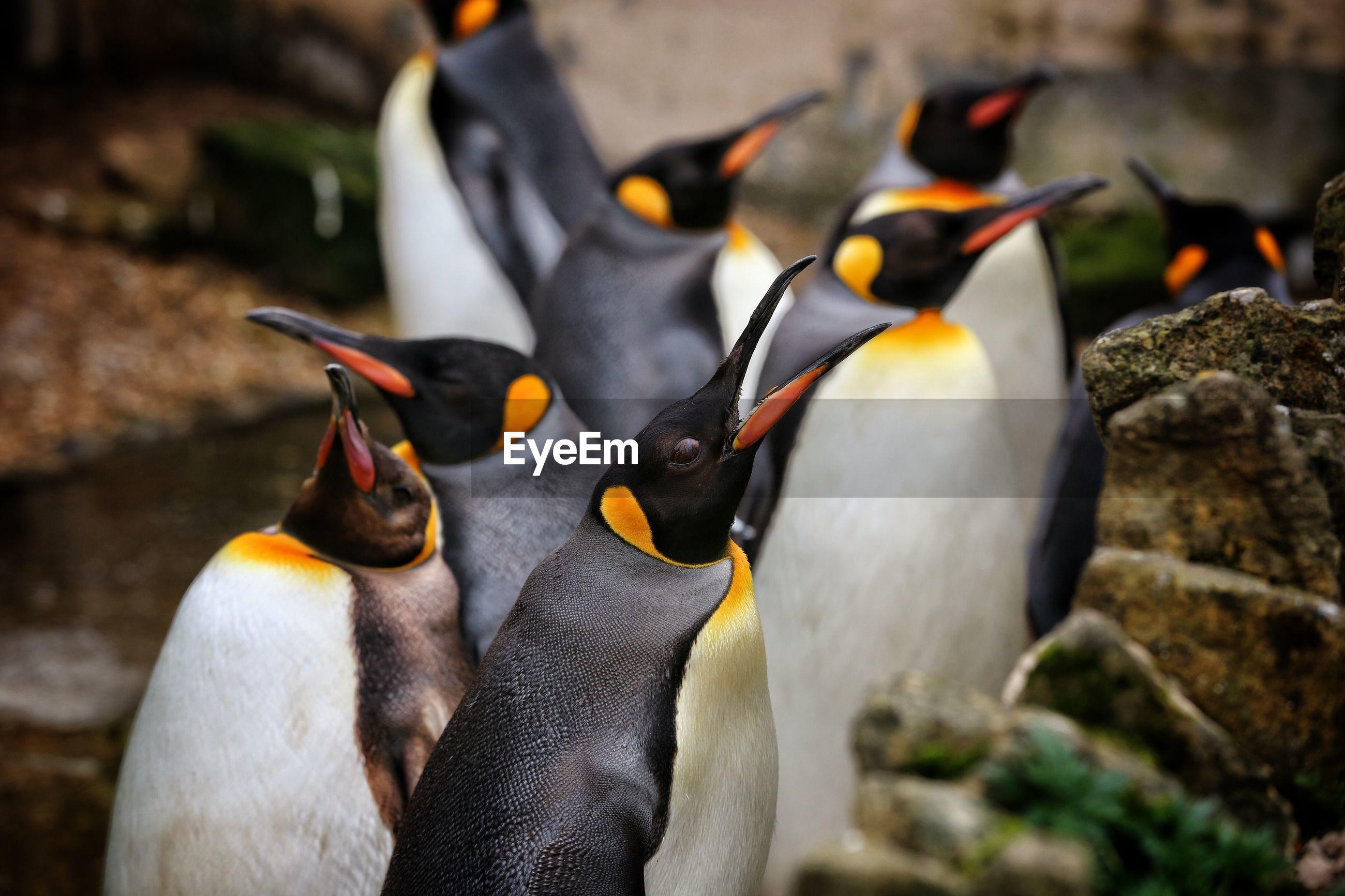 Penguins against lake