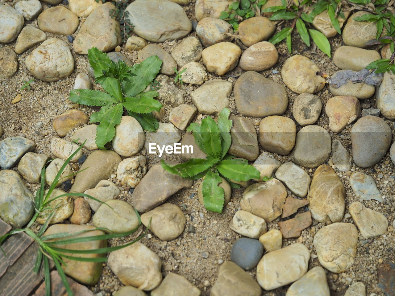 stone - object, pebble, leaf, rock - object, high angle view, green color, no people, day, nature, outdoors, plant, full frame, growth, large group of objects, close-up, backgrounds, fragility, beauty in nature, water, pebble beach, freshness