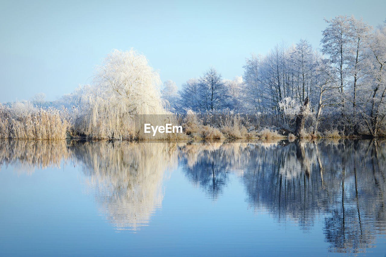 Snow covered trees with reflection on lake