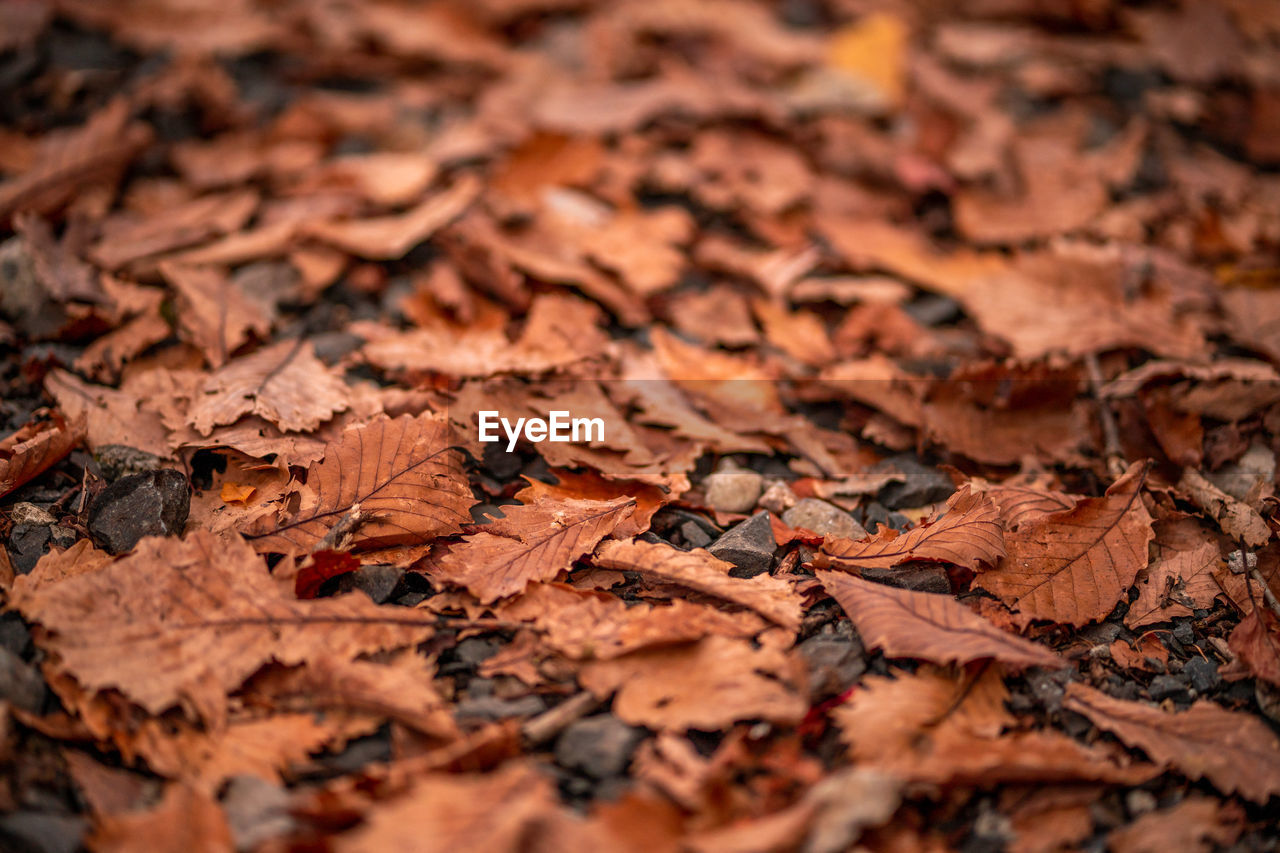 autumn, plant part, change, leaf, backgrounds, dry, selective focus, leaves, full frame, nature, no people, close-up, day, vulnerability, brown, land, fragility, beauty in nature, orange color, falling, outdoors, natural condition, autumn collection, maple leaf, surface level, dried