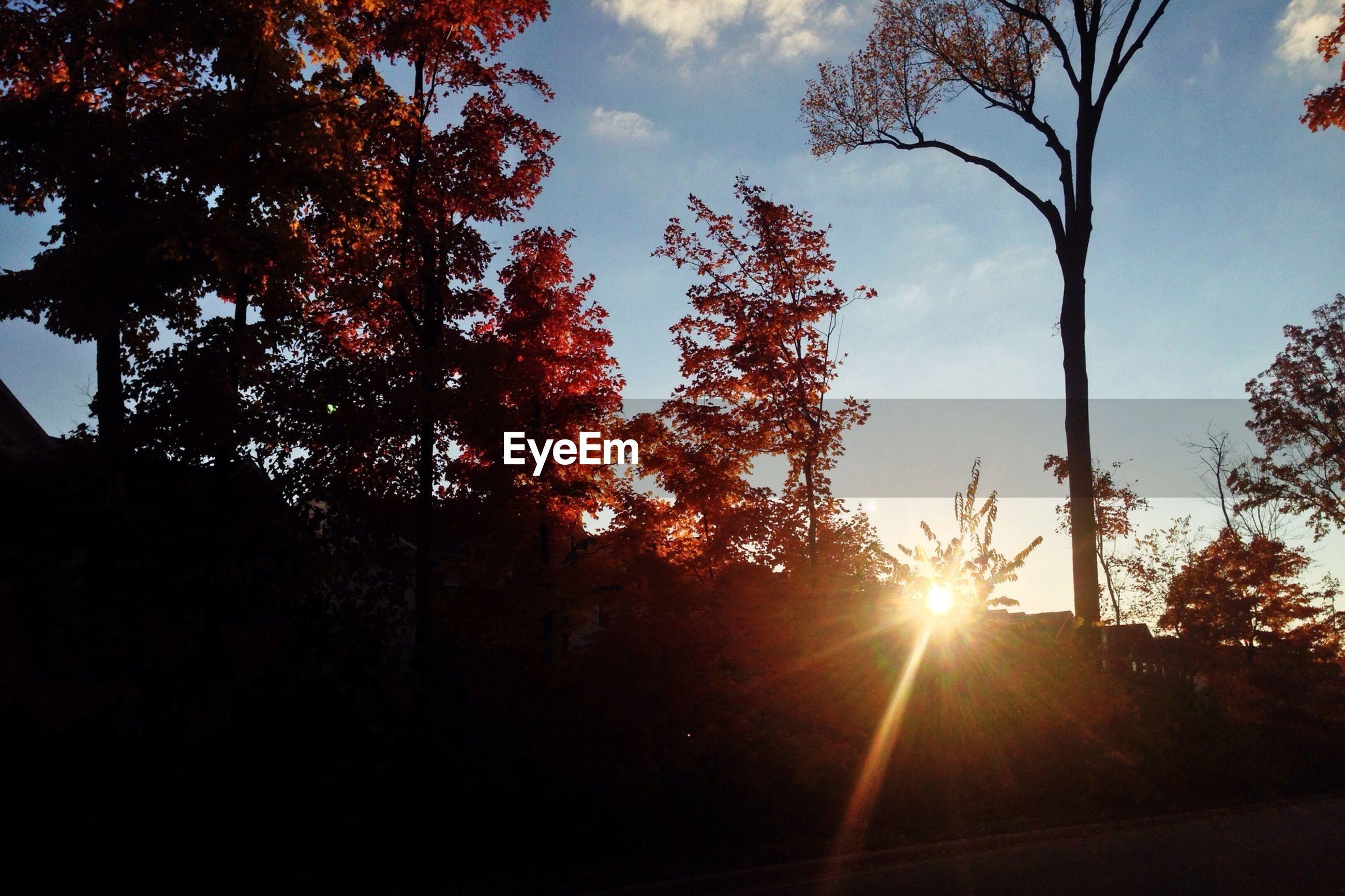Sunrise with autumn tree