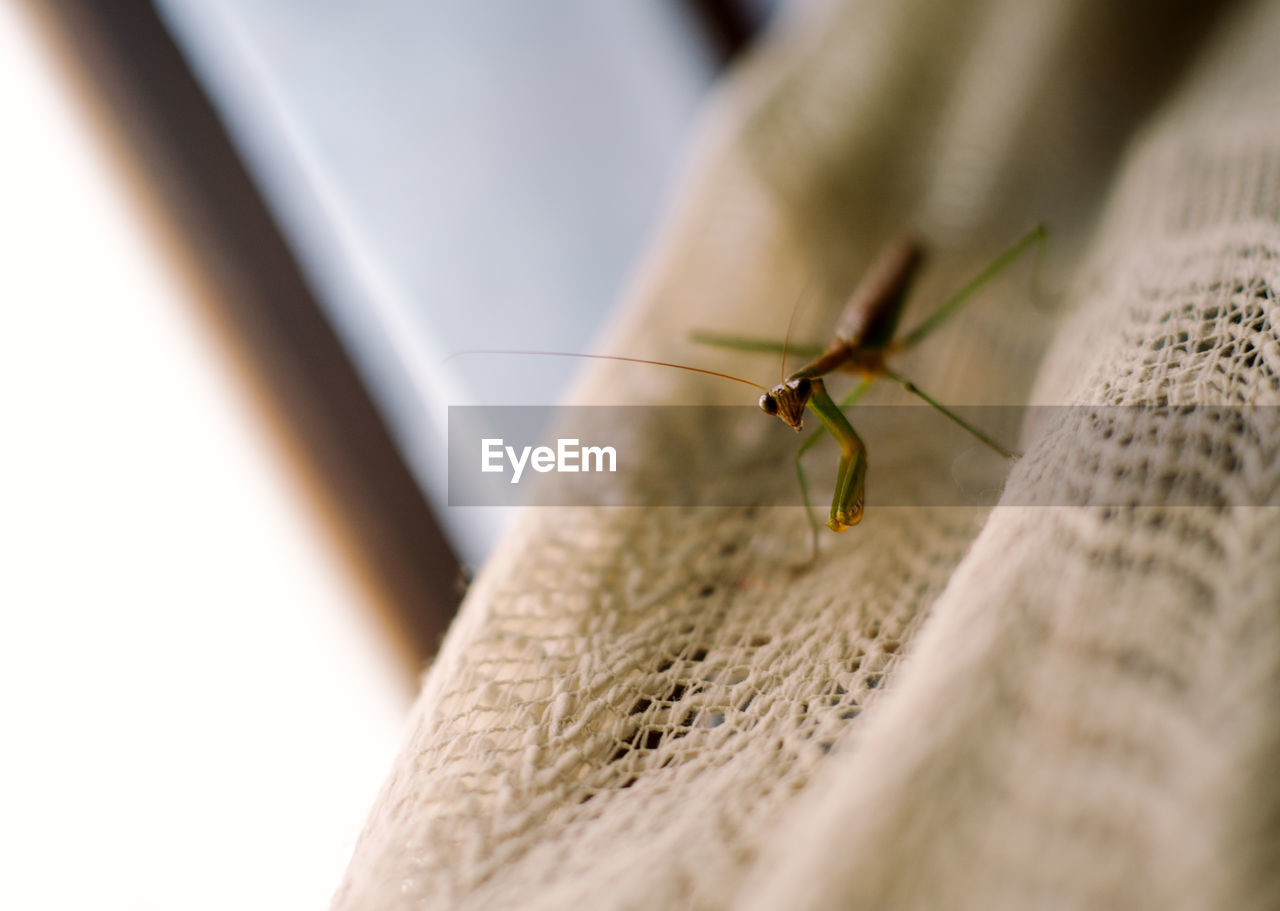 High angle view of grasshopper on jute