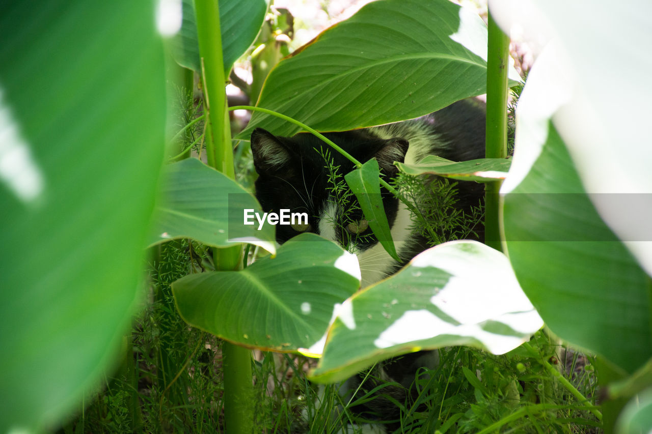 leaf, growth, green color, plant, nature, no people, beauty in nature, outdoors, day, banana tree, freshness, banana leaf, animal themes, close-up, fragility