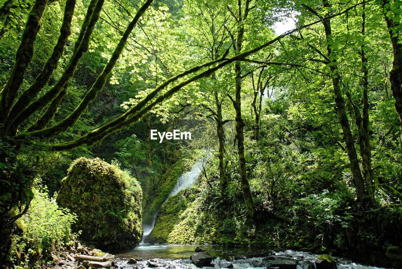 tree, plant, forest, beauty in nature, water, green color, land, growth, nature, scenics - nature, tranquility, day, foliage, lush foliage, non-urban scene, flowing water, no people, rock, rock - object, flowing, outdoors, rainforest, stream - flowing water, woodland