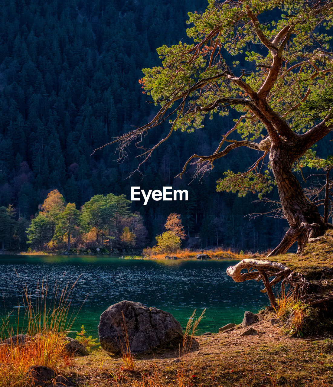 tree, nature, forest, no people, branch, outdoors, lake, tree trunk, water, scenics, beauty in nature, day, landscape, mountain