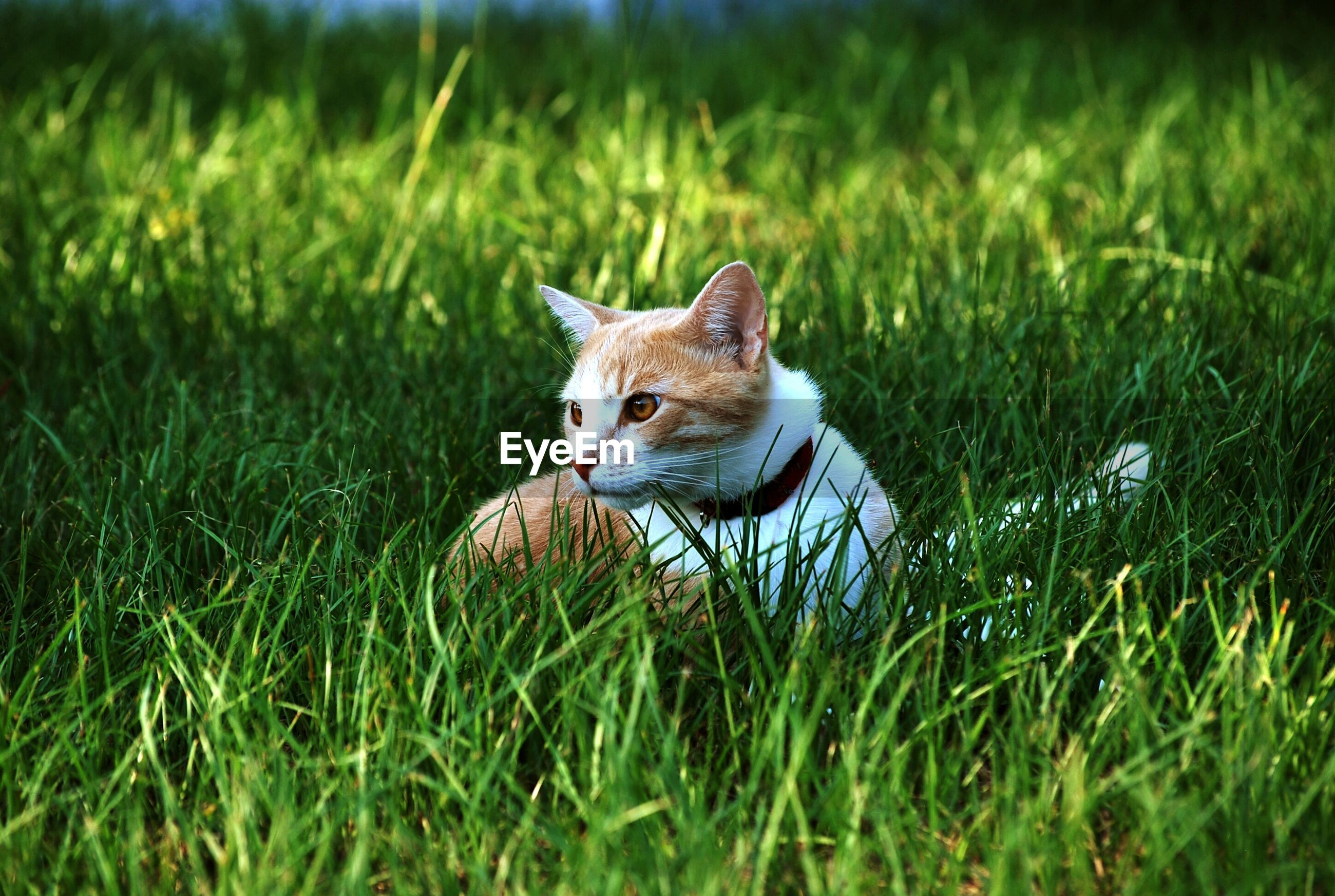 Close-up of cat sitting in grass