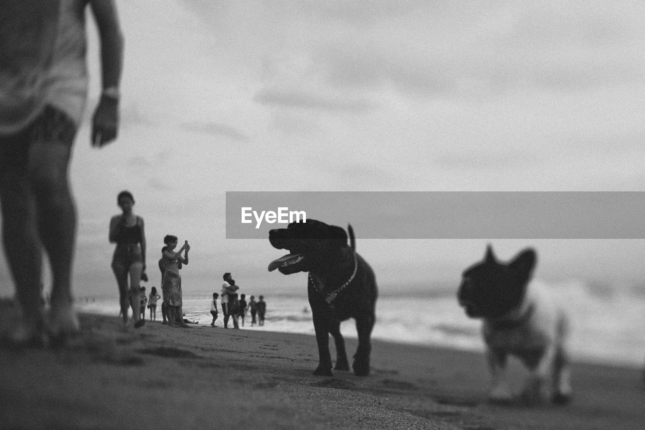 Dogs by man at beach against sky