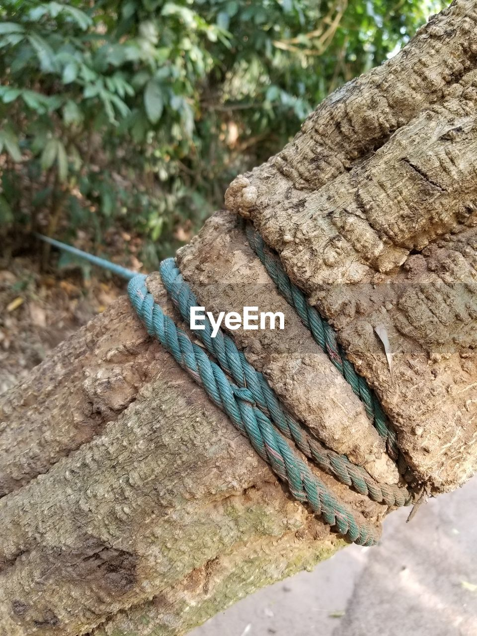 close-up, focus on foreground, day, rope, no people, textured, tied up, strength, nature, rough, pattern, high angle view, rock, plant, tied knot, blue, outdoors, twisted, tree, rock - object, tangled
