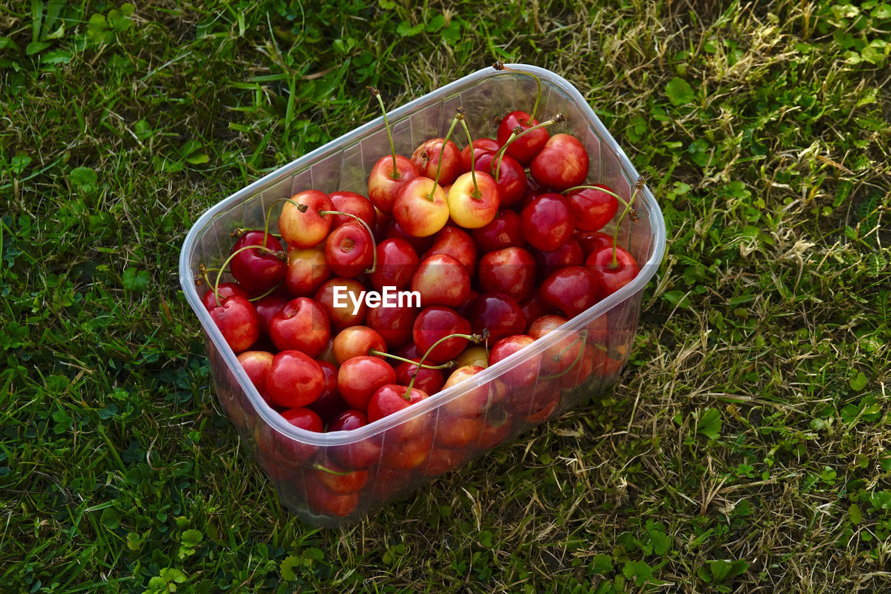 food and drink, food, healthy eating, red, fruit, wellbeing, grass, freshness, high angle view, plant, field, land, large group of objects, day, container, nature, abundance, green color, apple - fruit, no people, outdoors, ripe