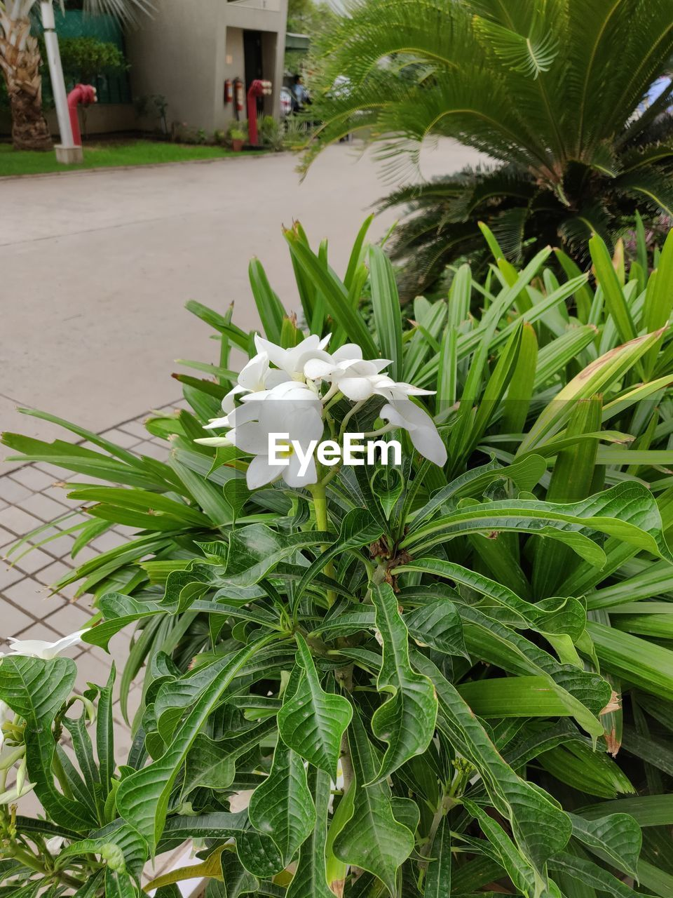 plant, flower, growth, flowering plant, leaf, plant part, freshness, beauty in nature, fragility, vulnerability, green color, petal, nature, close-up, white color, day, no people, inflorescence, flower head, outdoors