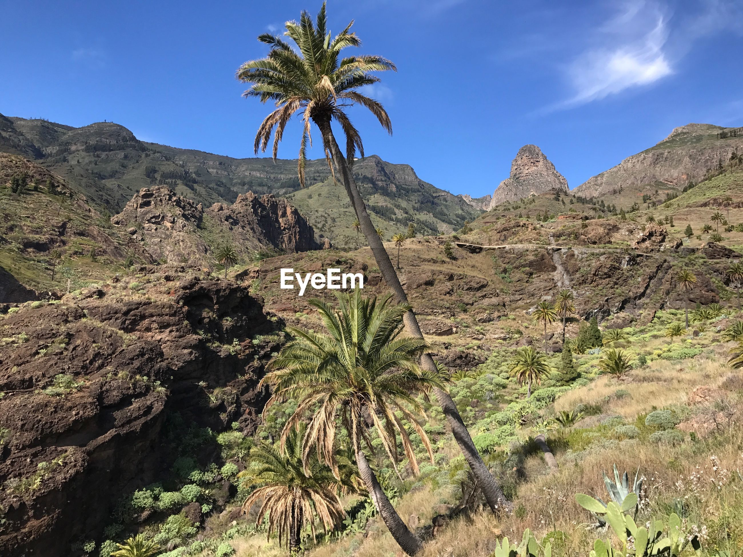 PALM TREES AGAINST MOUNTAINS