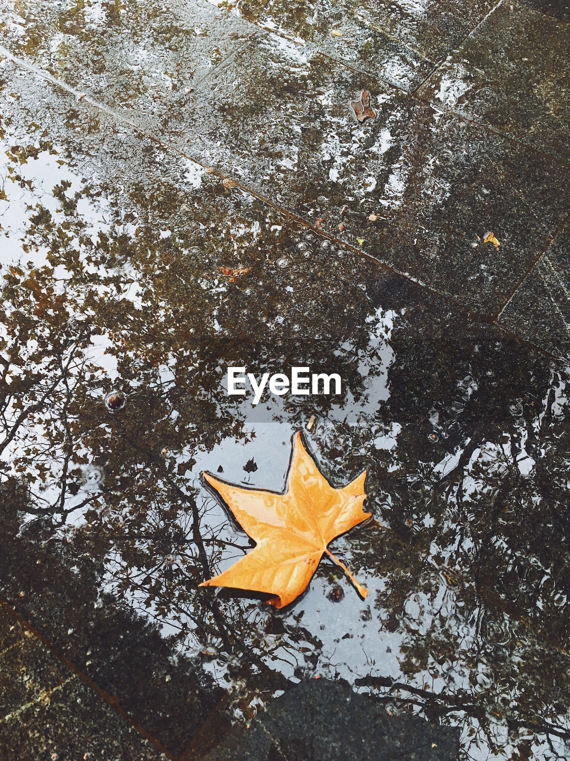 HIGH ANGLE VIEW OF YELLOW MAPLE LEAF ON AUTUMN