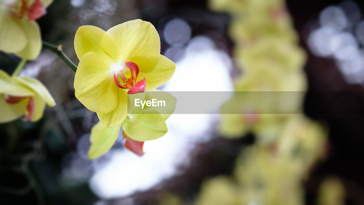 flower, petal, beauty in nature, fragility, growth, nature, freshness, flower head, yellow, blooming, close-up, day, no people, plant, outdoors