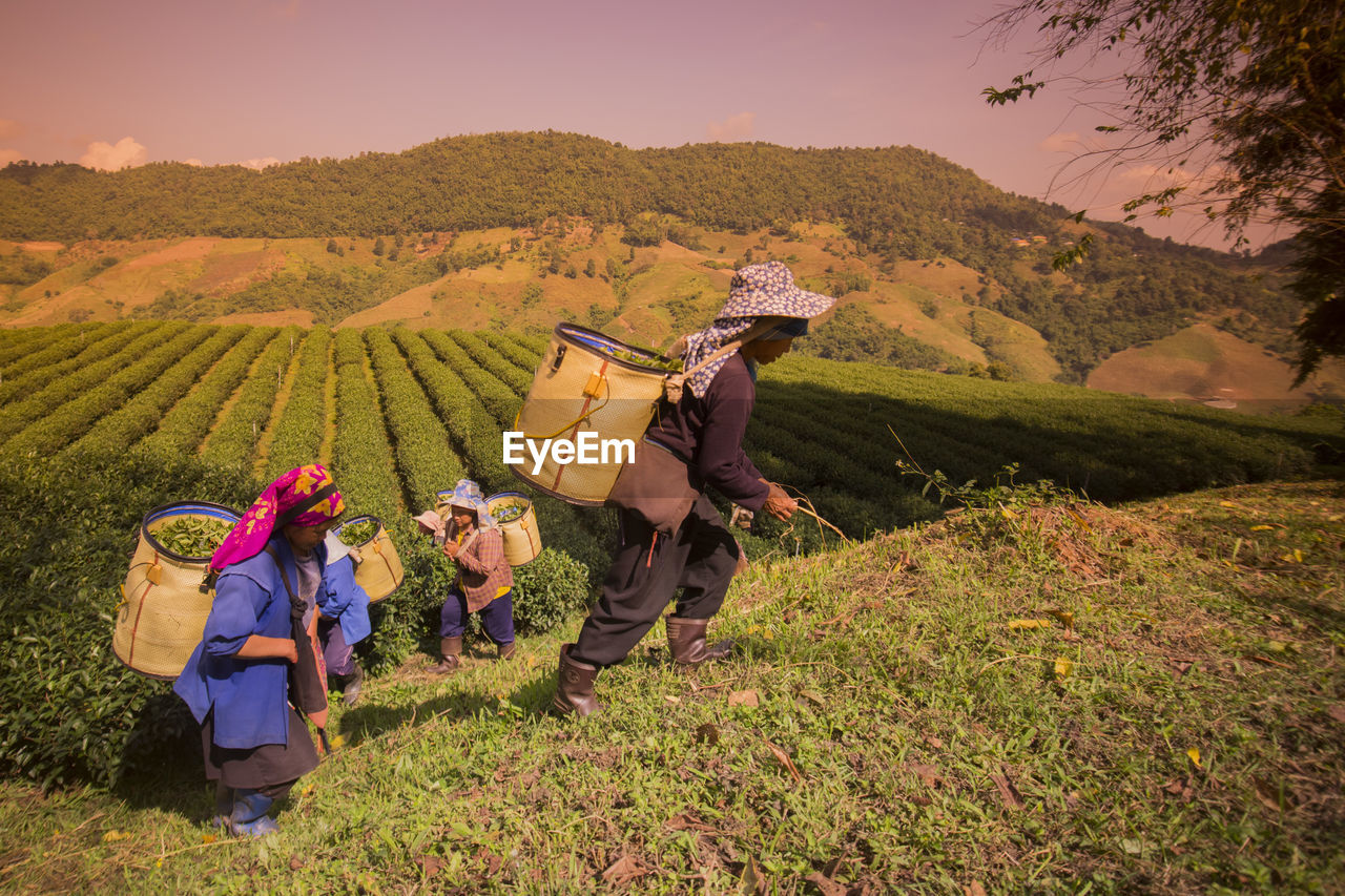 Female farmers picking tea leaves at plantation on sunny day