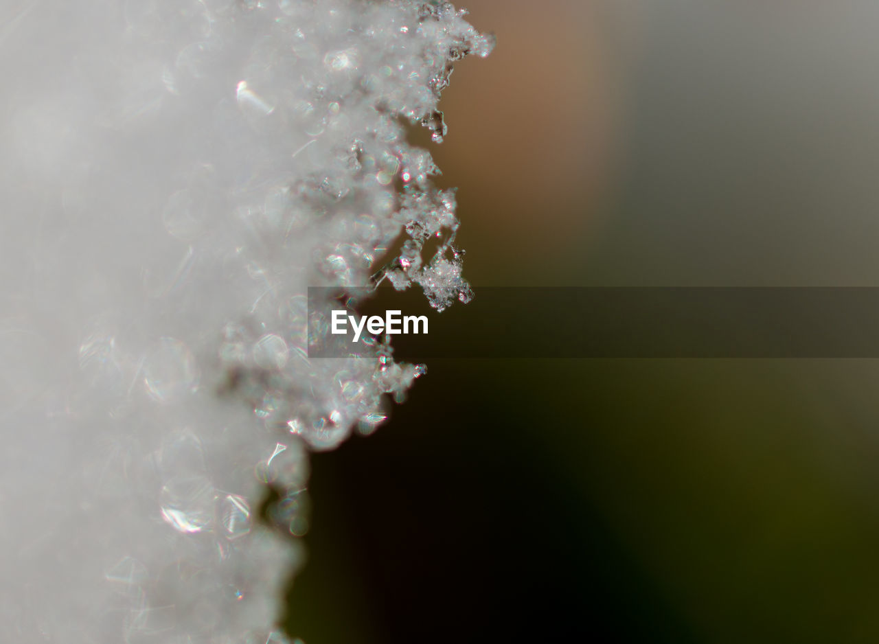 no people, nature, beauty in nature, close-up, freshness, cold temperature, outdoors, day