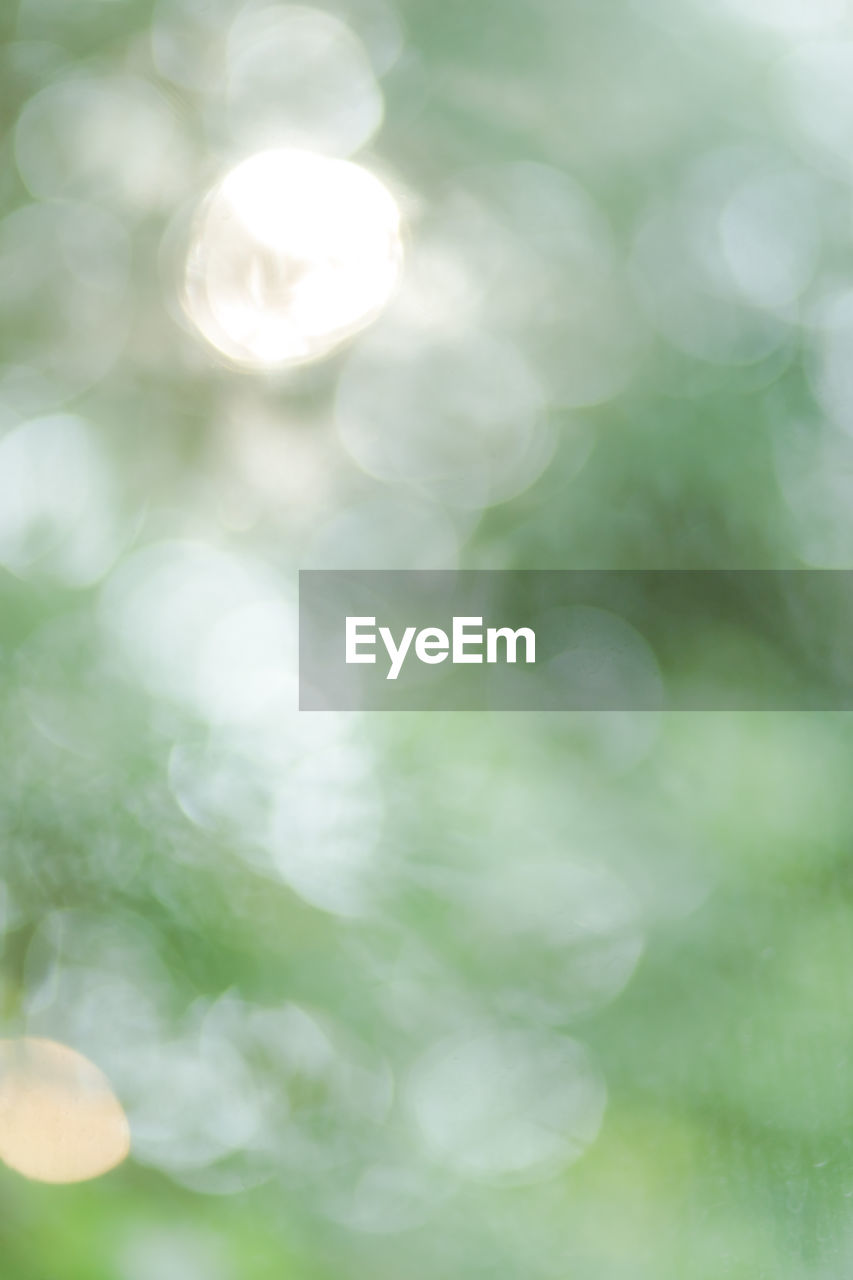 no people, lens flare, close-up, focus on foreground, beauty in nature, day, defocused, white color, outdoors, nature, backgrounds, tranquility, full frame, selective focus, plant, freshness, growth, green color, sunlight, glowing