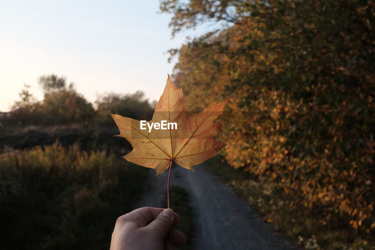 leaf, autumn, change, real people, one person, maple leaf, focus on foreground, holding, nature, human hand, outdoors, maple, human body part, dry, close-up, day, tree, beauty in nature, fragility, people