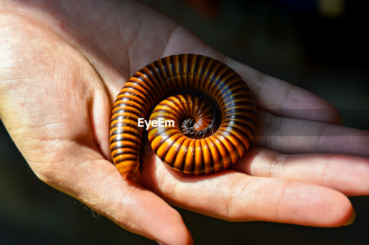 Cropped Hand Holding Millipede