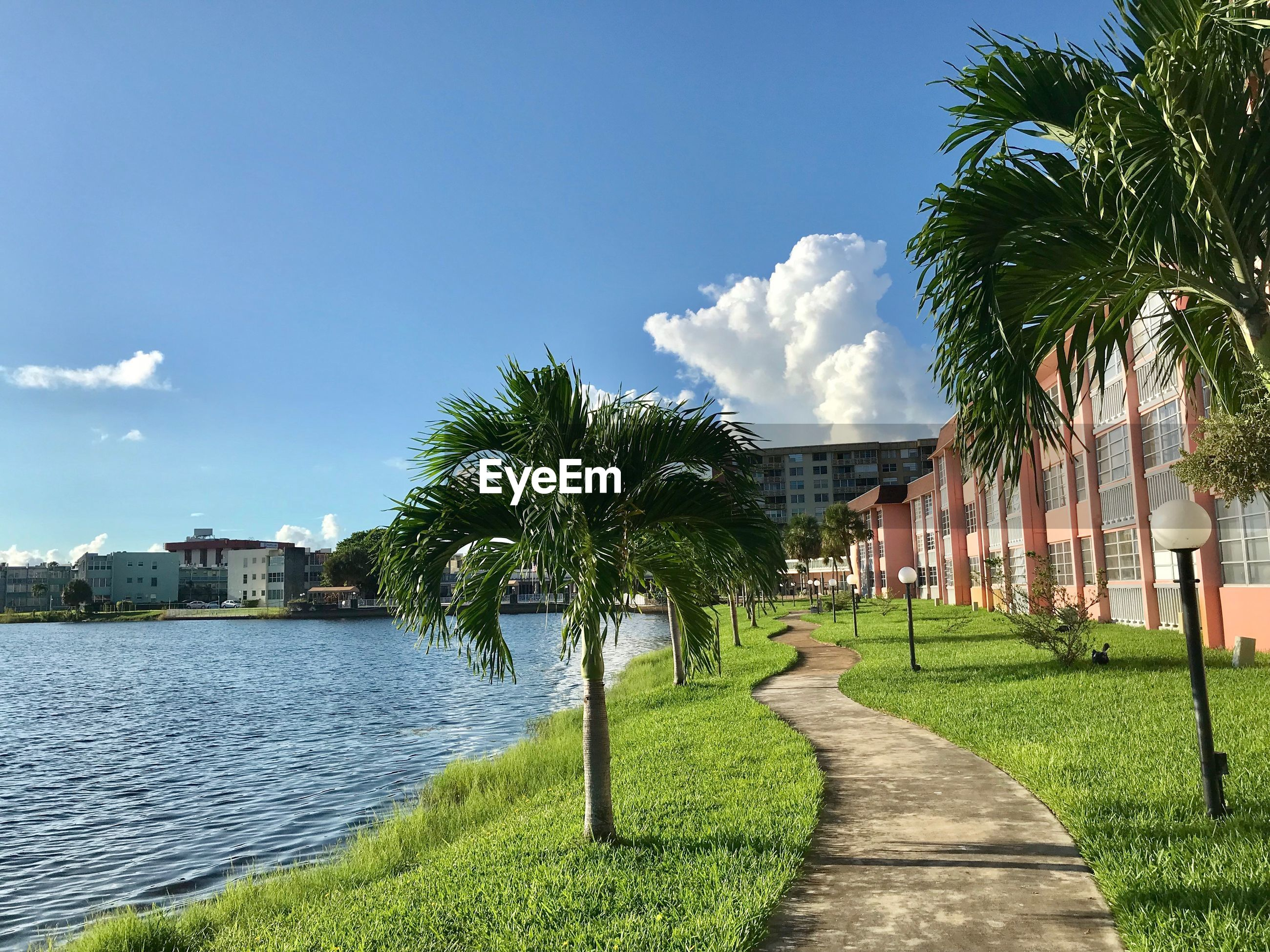 Footpath amidst palm trees and buildings against sky