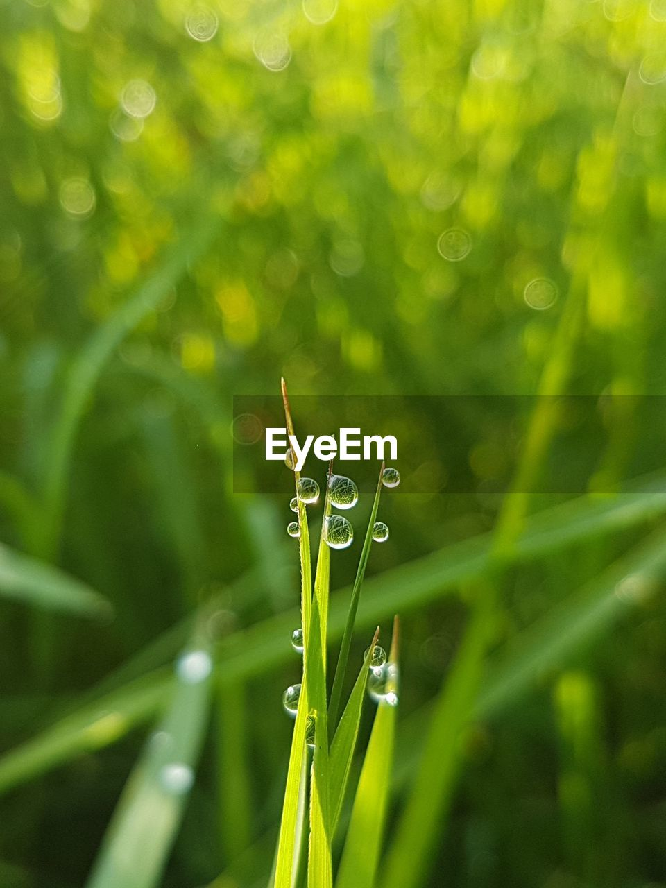 green color, growth, nature, drop, close-up, plant, focus on foreground, beauty in nature, outdoors, day, grass, fragility, no people, freshness, wet, water