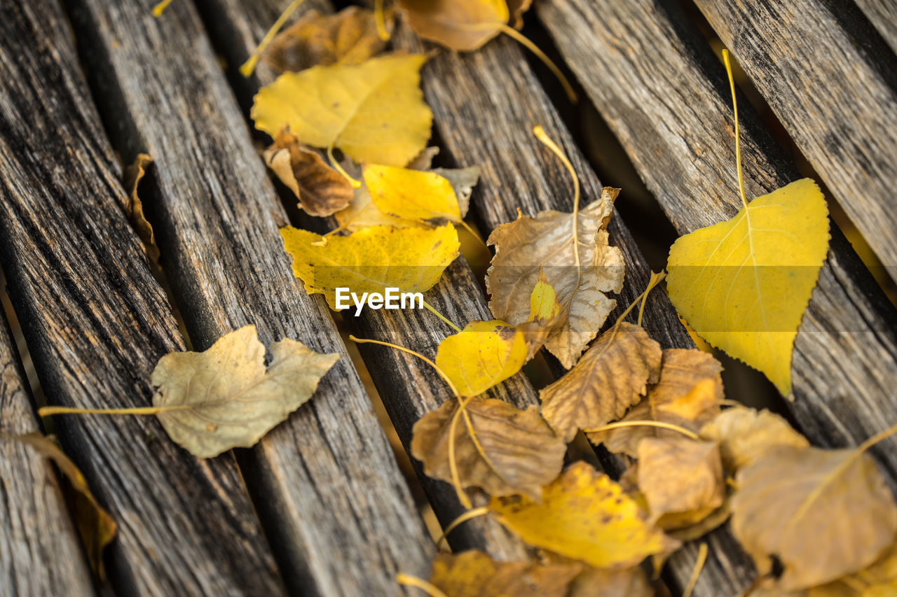 wood - material, leaf, plant part, yellow, nature, close-up, no people, autumn, change, leaves, day, wood, dry, outdoors, tree, selective focus, textured, high angle view, plank, falling