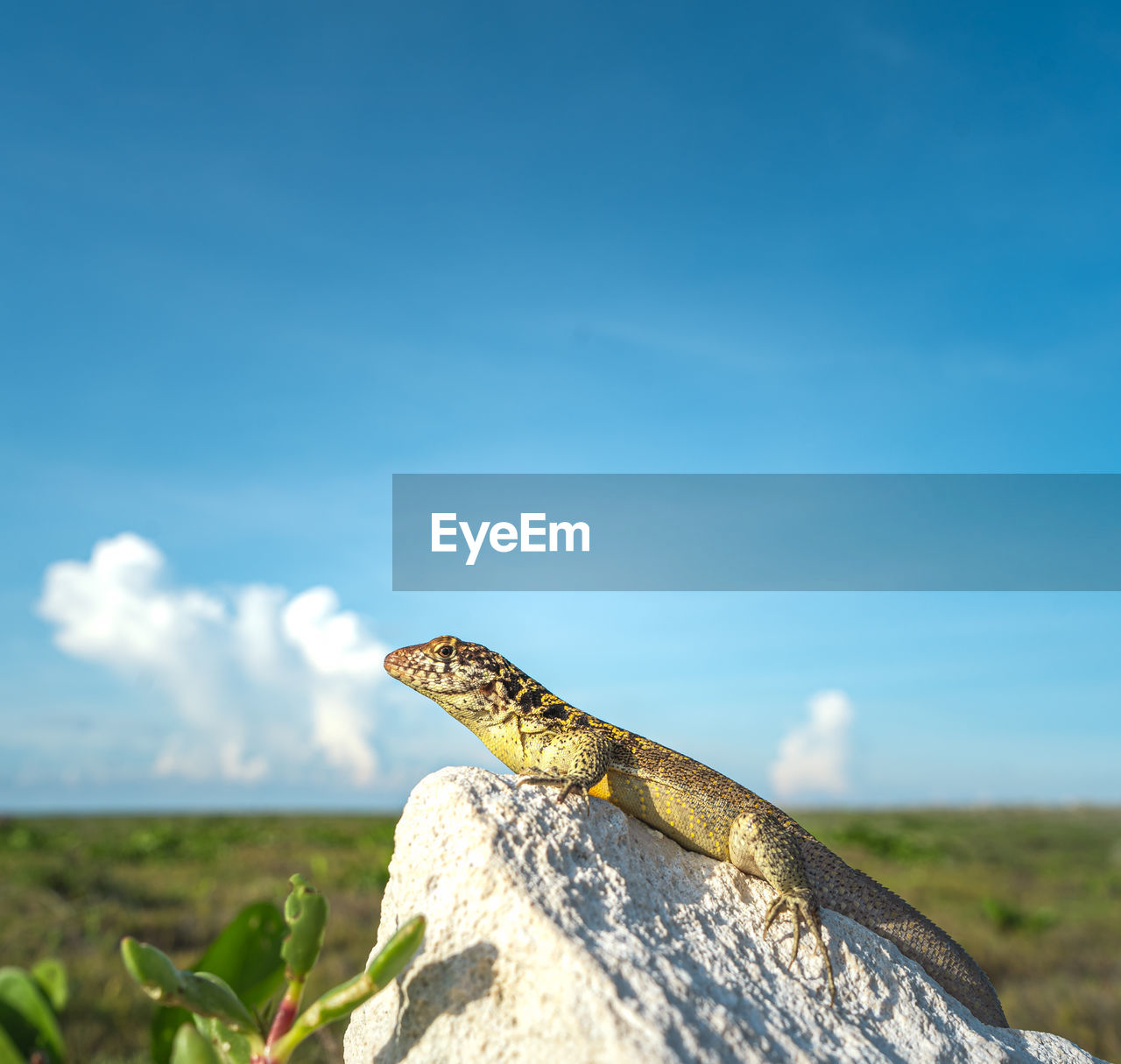 one animal, animal themes, animal, animal wildlife, reptile, animals in the wild, vertebrate, sky, lizard, nature, focus on foreground, no people, day, rock, rock - object, solid, close-up, outdoors, copy space, sunlight
