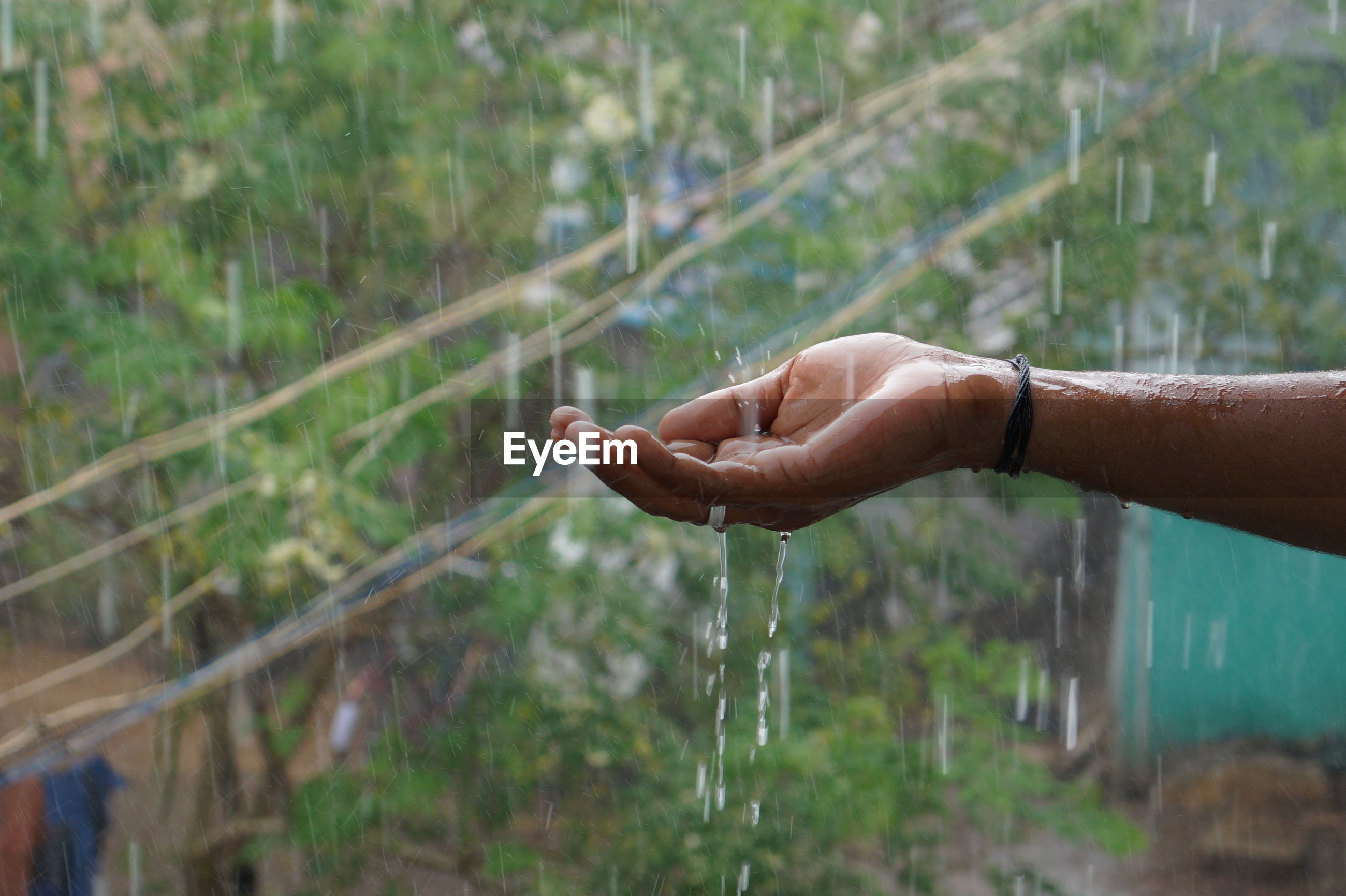 Water falling on cropped hand during rainy season