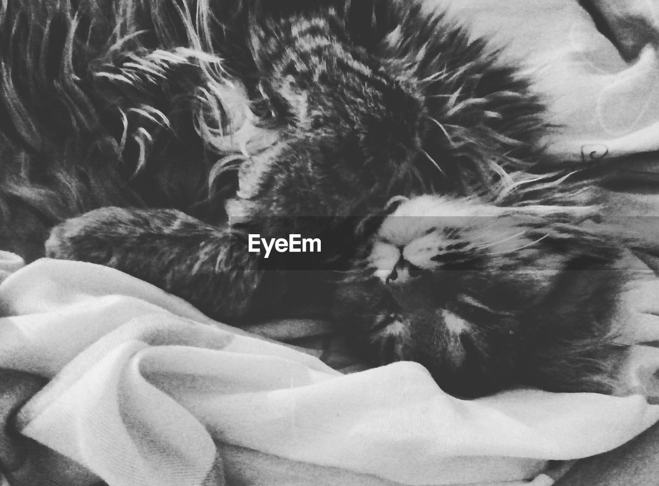 pets, animal themes, domestic animals, domestic cat, mammal, sleeping, relaxation, indoors, feline, one animal, lying down, no people, bed, close-up, day
