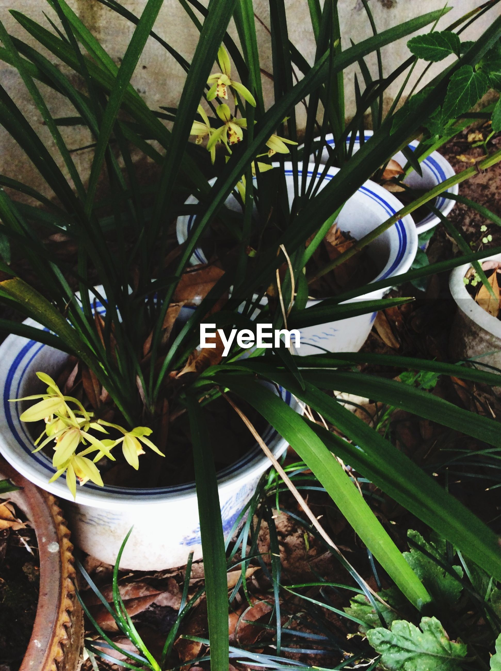 growth, plant, leaf, green color, potted plant, front or back yard, close-up, nature, tree, day, outdoors, sunlight, no people, high angle view, growing, built structure, freshness, formal garden, low angle view, circle