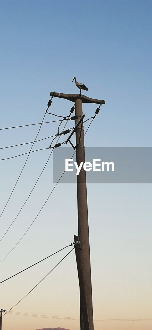 sky, electricity, cable, vertebrate, bird, low angle view, clear sky, fuel and power generation, technology, power supply, animal themes, animal, power line, animal wildlife, animals in the wild, electricity pylon, nature, no people, perching, connection, outdoors, telephone line