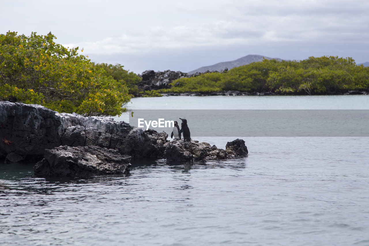 water, sky, waterfront, beauty in nature, tree, scenics - nature, rock, tranquil scene, plant, tranquility, nature, non-urban scene, rock - object, day, solid, no people, idyllic, cloud - sky, sea, outdoors
