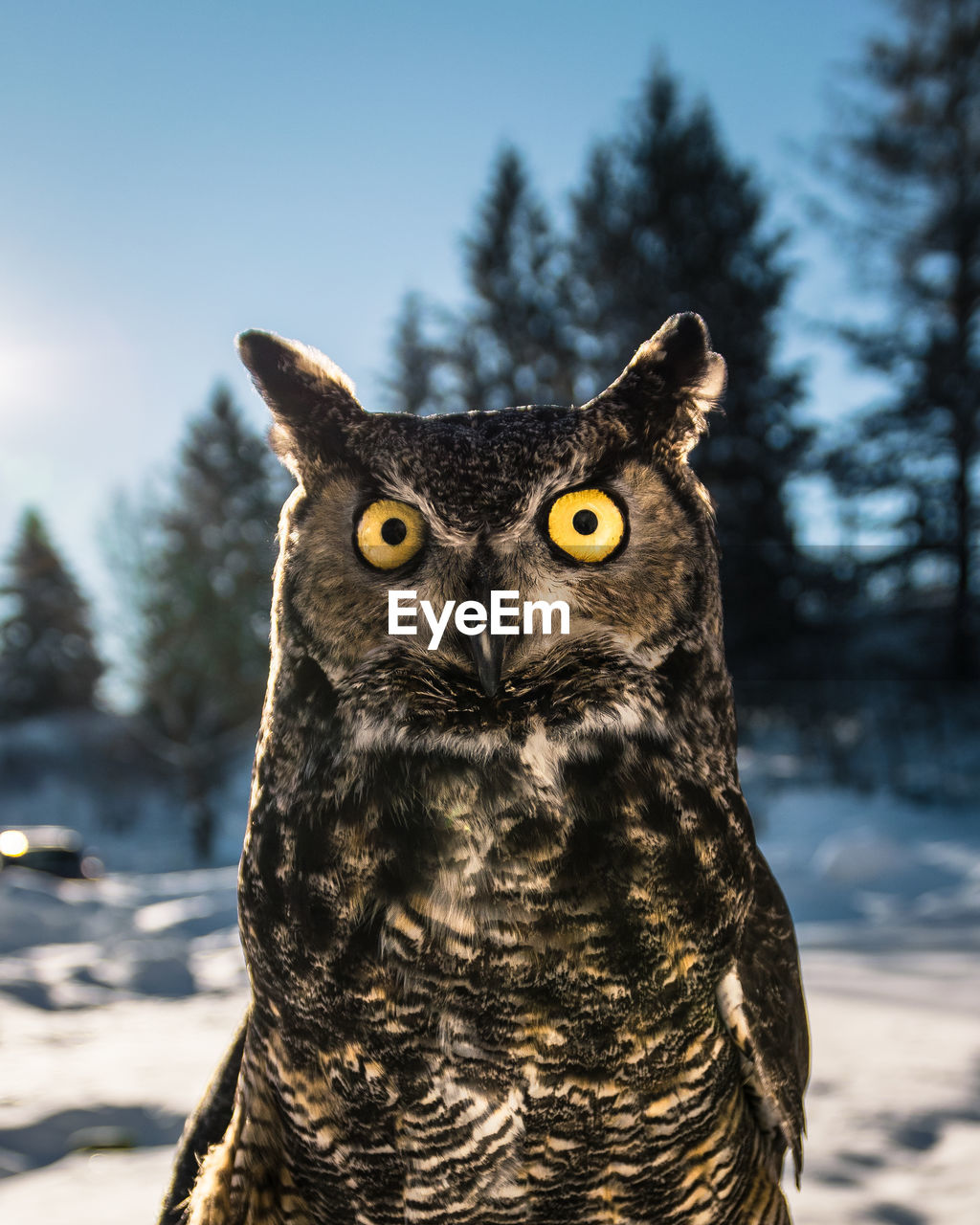 Close-Up Of Owl Against Sky During Winter