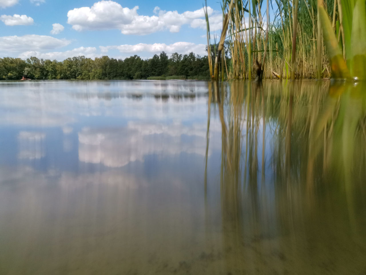 water, reflection, lake, tranquility, tree, plant, sky, beauty in nature, tranquil scene, waterfront, scenics - nature, no people, nature, day, growth, cloud - sky, outdoors, non-urban scene, green color, reflection lake
