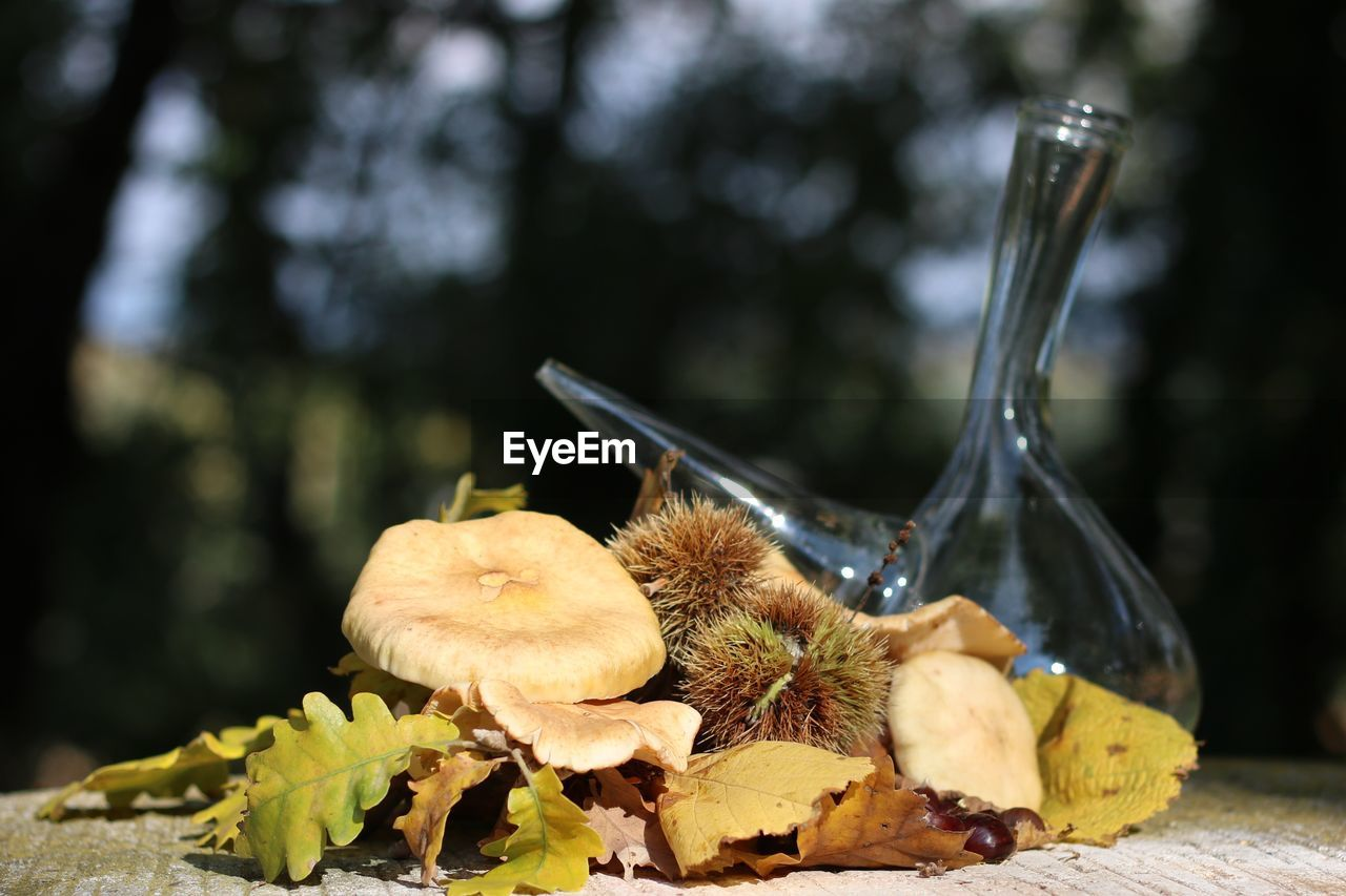 Close-up of autumn leaves and mushrooms on table