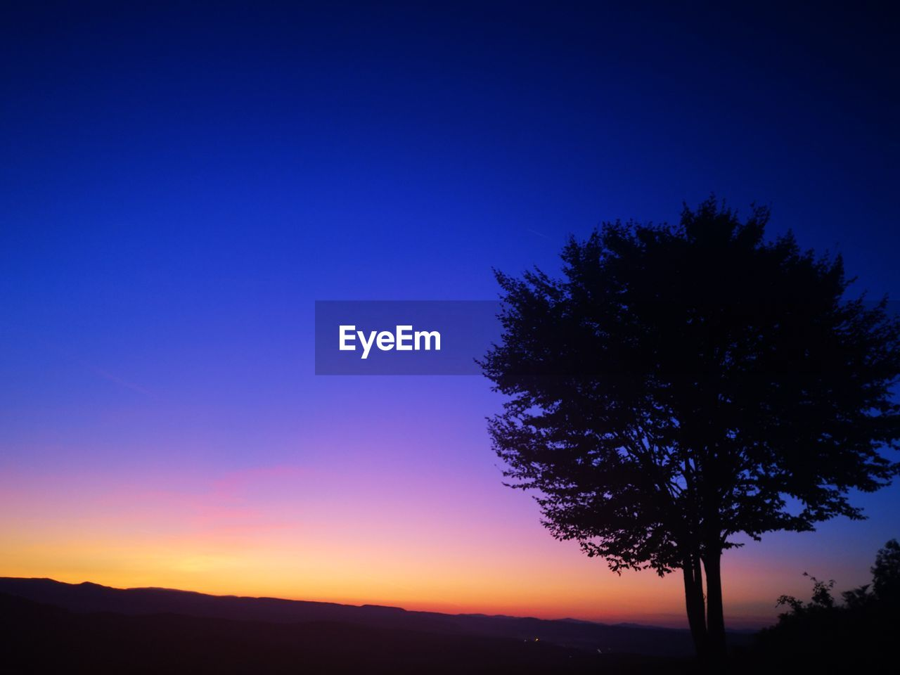 sky, silhouette, beauty in nature, plant, tree, scenics - nature, tranquil scene, tranquility, blue, sunset, nature, copy space, no people, clear sky, orange color, growth, idyllic, night, non-urban scene, outdoors, purple