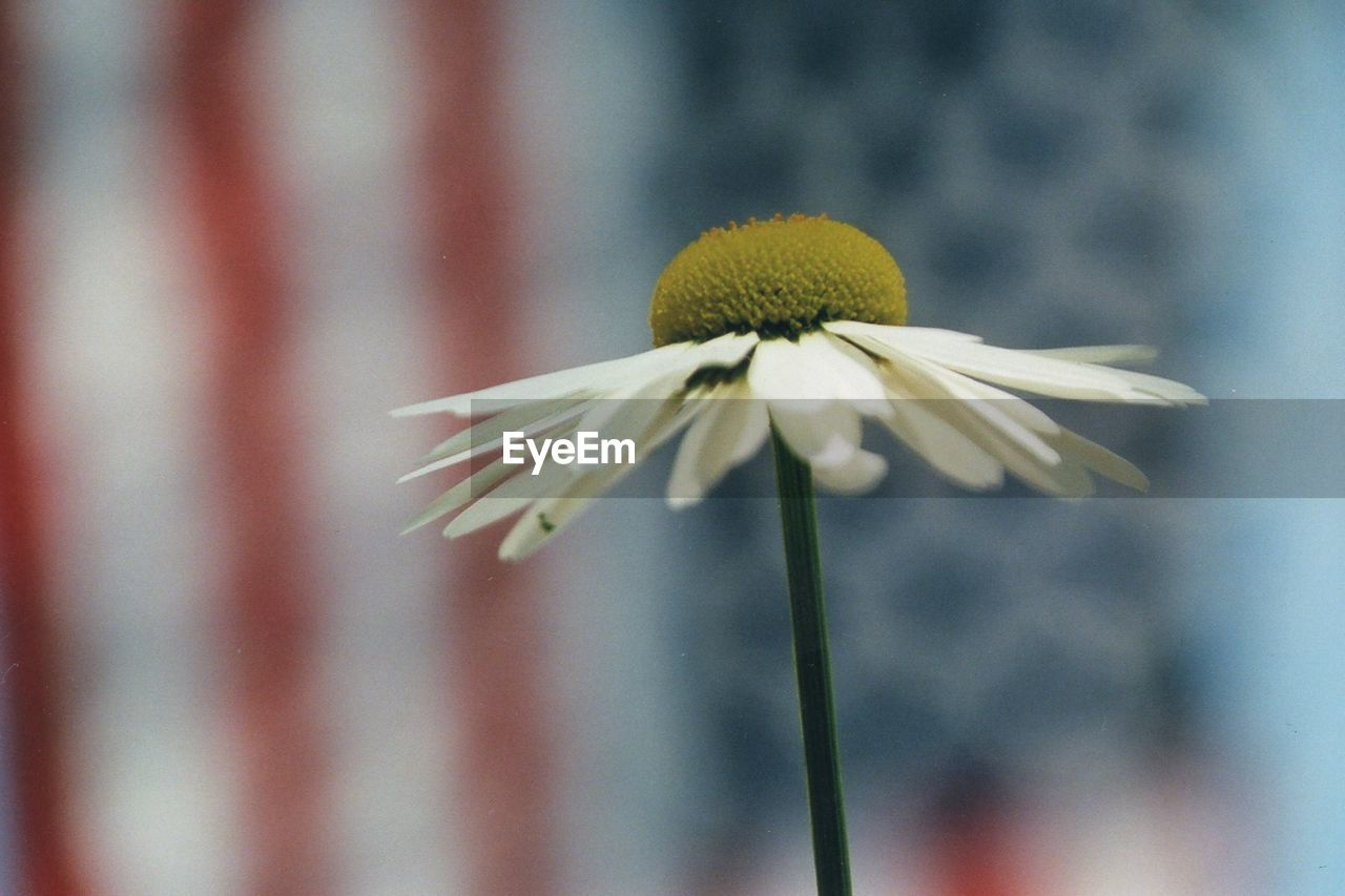 flower, fragility, petal, close-up, flower head, freshness, focus on foreground, nature, beauty in nature, day, growth, no people, coneflower, plant, blooming, outdoors, animal themes