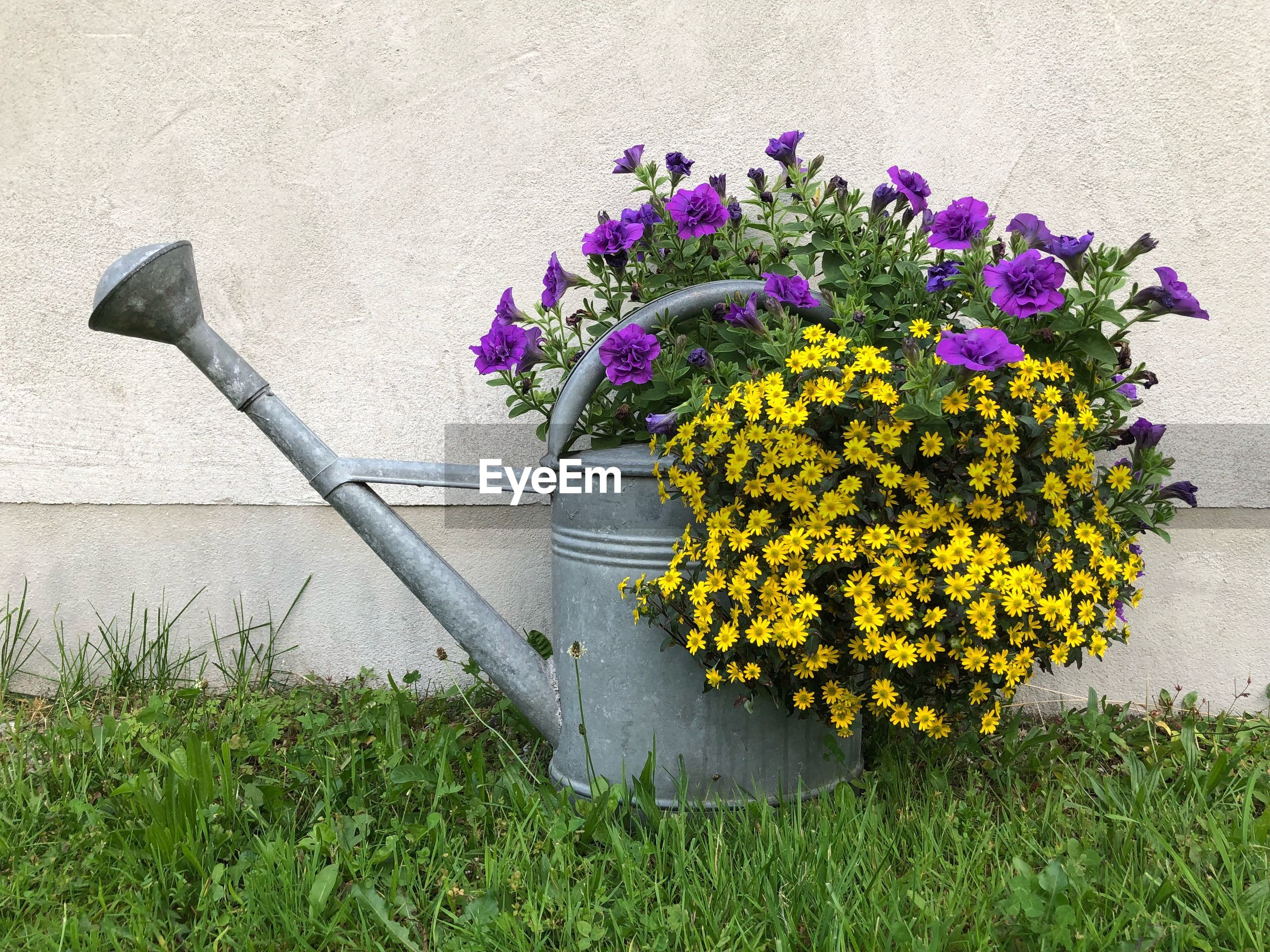 Flowers and watering cane on lawn
