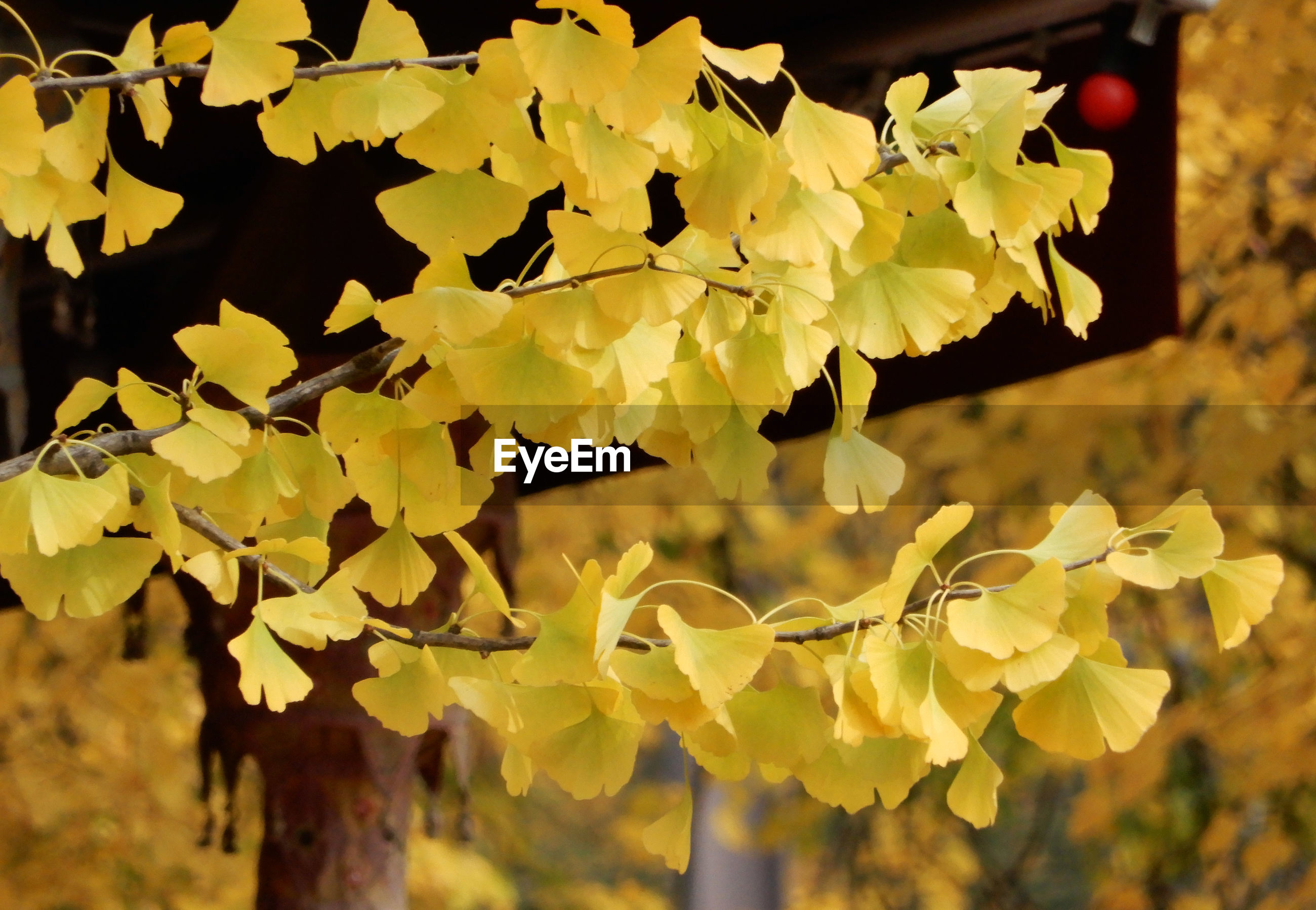 CLOSE-UP OF YELLOW FLOWERING PLANT AGAINST TREE