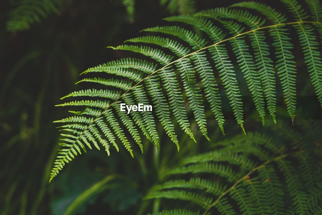leaf, plant part, green color, growth, plant, close-up, beauty in nature, fern, focus on foreground, nature, no people, day, tree, leaves, selective focus, tranquility, outdoors, natural pattern, botany, full frame, palm leaf, rainforest