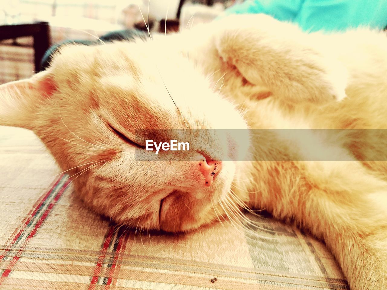 domestic cat, sleeping, pets, eyes closed, domestic animals, one animal, animal themes, relaxation, indoors, lying down, mammal, resting, close-up, feline, whisker, comfortable, no people, bed, day