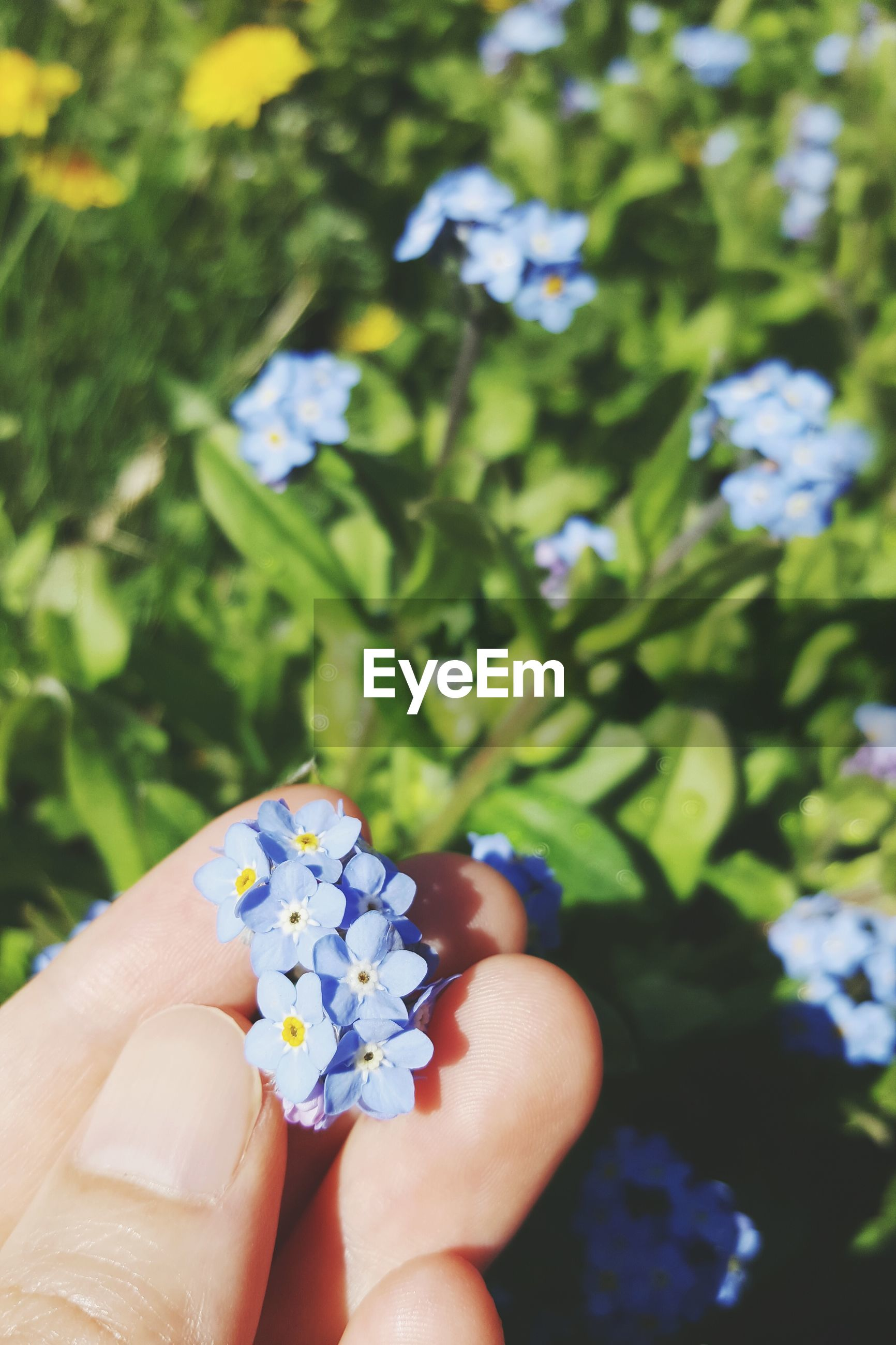 Cropped hand holding flowers